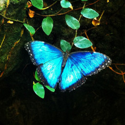 butterfly starrynights27 picsart pcbugsandinsects bugsandinsects