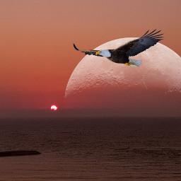 freetoedit sunset moon eagle sea