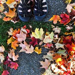 freetoedit fall leaves feet