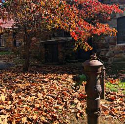 freetoedit fall leaves sunlight oldbuildings