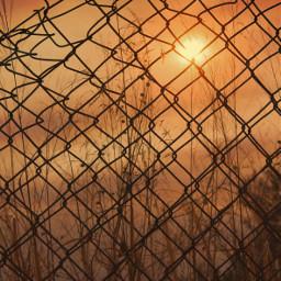 freetoedit oldrustyironnetting silhoutte goldenhour sunsettime