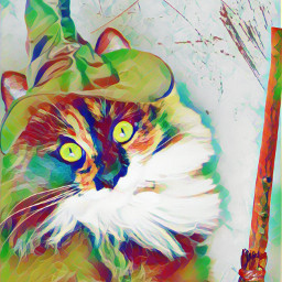 freetoedit picsart cat hat catinahat