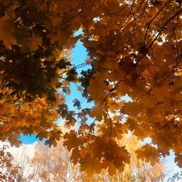 photography nature autumn leaves amazing ukraine freetoedit