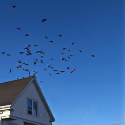 freetoedit flockofbirds birdsinflight roof sky