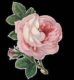 flower aesthetic freetoedit