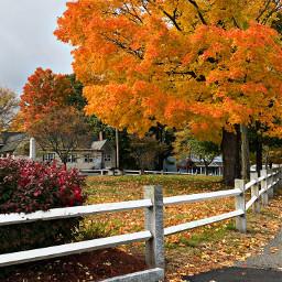 freetoedit fallcolors fallingleaves autumnvibes park pccolororange