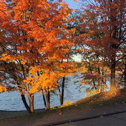 freetoedit autumn fall gold goldenhour pcbeautifuldays