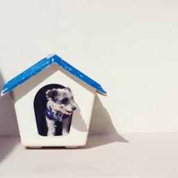 dog dogs pet pets animal freetoedit