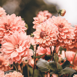 flower flowers background backgrounds freetoedit