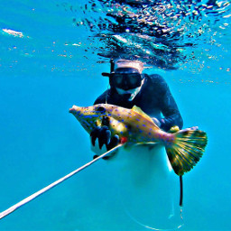 freetoedit snorkeling underwaterlife fish colofull