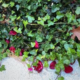 freetoedit petals leaves floralbackground floralcanvas