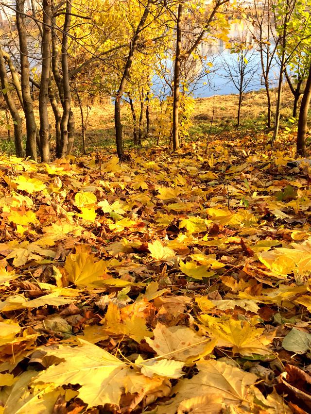 #photography #nature #autumn #leaves #trees #lake #amazing #ukraine #freetoedit