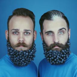 blueberries beards