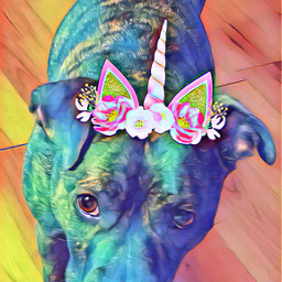 freetoedit pitbulllife sheisanangel crownflower
