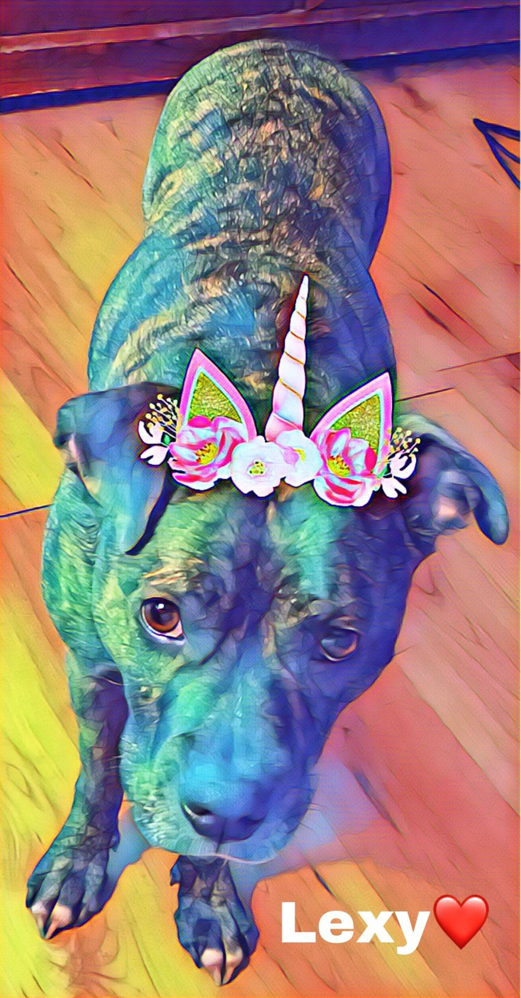 #freetoedit #pitbulllife #sheisanangel #crownflower