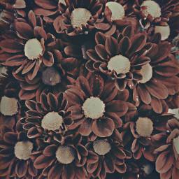 freetoedit nature flowers moody naturephotography