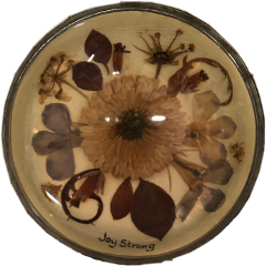 aesthetic driedflowers vintage freetoedit