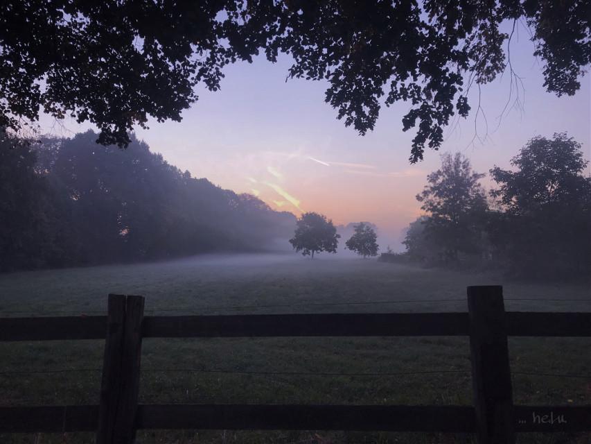 #foggymorning #foggymorningsunrise #nature #morningmood #morningmist