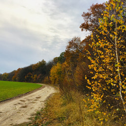 photography nature autumn forest treeoflife freetoedit