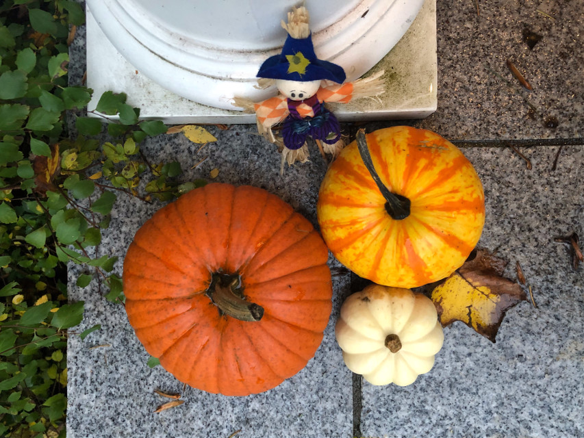 #freetoedit #pumpkins #fall #fallvibes #stilllife #autumncolors #highangle #orange #shapes