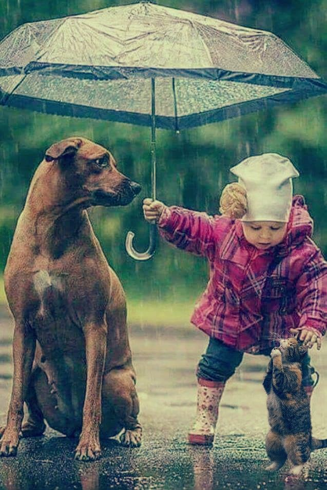 #freetoedit #umbrella #kid #girl #dog #cat #people #animals #rain @pa @freetoedit #picsart #remix