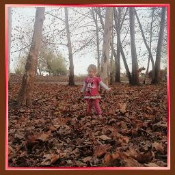 autumn forest leaves freetoedit pcadventuretime