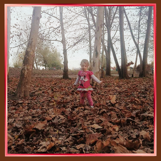 #autumn #forest #leaves