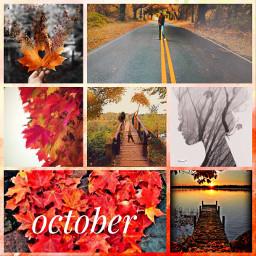 ccfallcollage fallcollage autumnal orangeleaves nature freetoedit