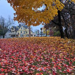freetoedit leaves fallingleaves fallcolors