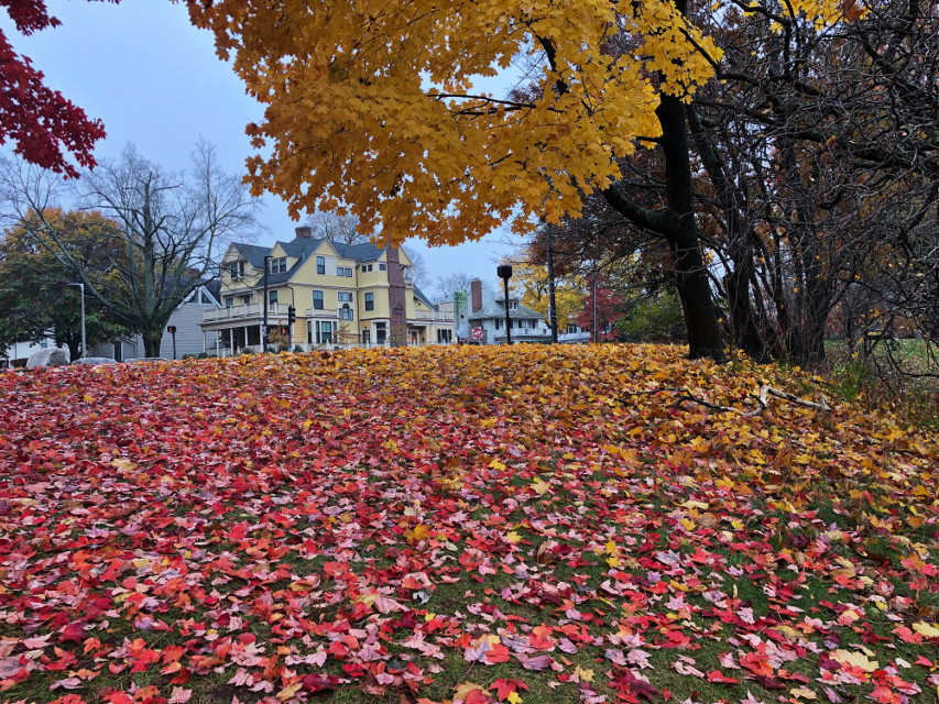 #freetoedit #leaves #fallingleaves #fallcolors