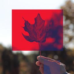 ircautumnleaf autumnleaf autumnleaves autumn art freetoedit
