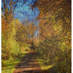 pavement landscape woodland forest foliage scenery