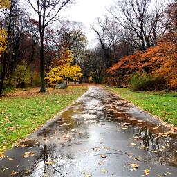 freetoedit reflection fallleaves fallcolors leaves