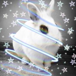 puszek bunny rabbit kr krolik freetoedit