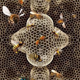 freetoedit honeycomb bees mirrormaniamonday savethebees