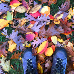 freetoedit fall leaves colorfull nature pcfavoriteshoes