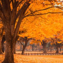 pcbeautifuldays beautifuldays fall autumn freetoedit