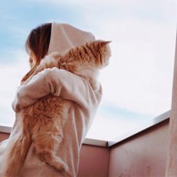 pcbettertogether bettertogether girl cat kitten