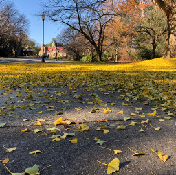 freetoedit leaves path road autumn