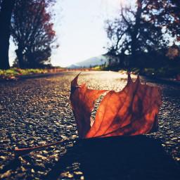 photography atumn nature interesting