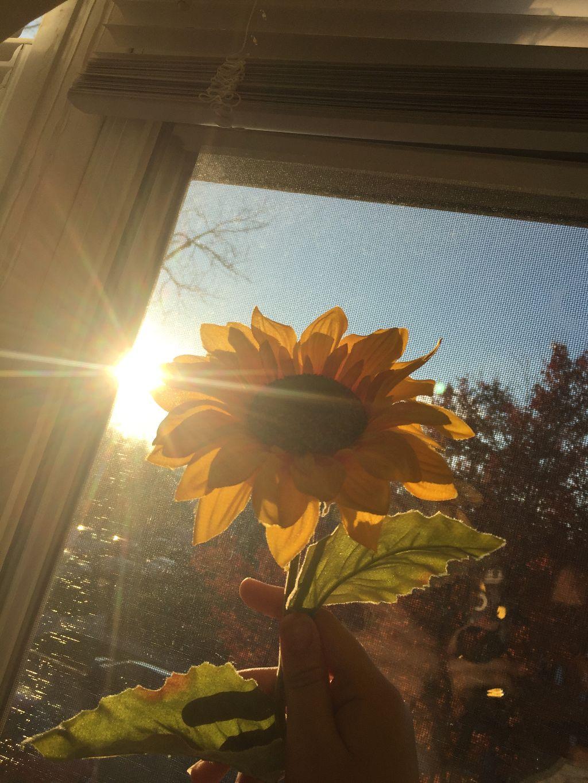 Photography Sunflower Tumblr