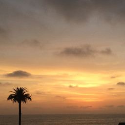thankful beach sun sunset palmtree