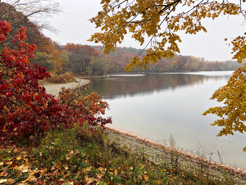 #freetoedit Happy Thanksgiving all friends near and far! 🧡💛💚 #landscape #nearandfar #autumncolors #fallcolors #fallingleaves #nature #reflection #mistymorning