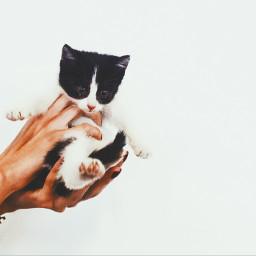 freetoedit cat kitten kitty newbornkitty pciamthankfulfor pcpetsofpa