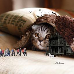 cat art surreal manipulation visual freetoedit