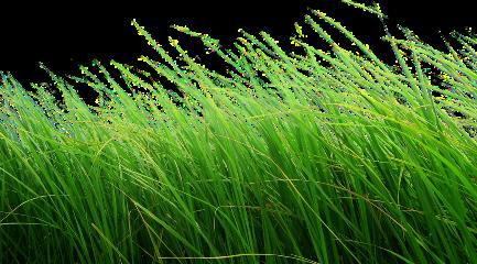 grass windygrass freetoedit