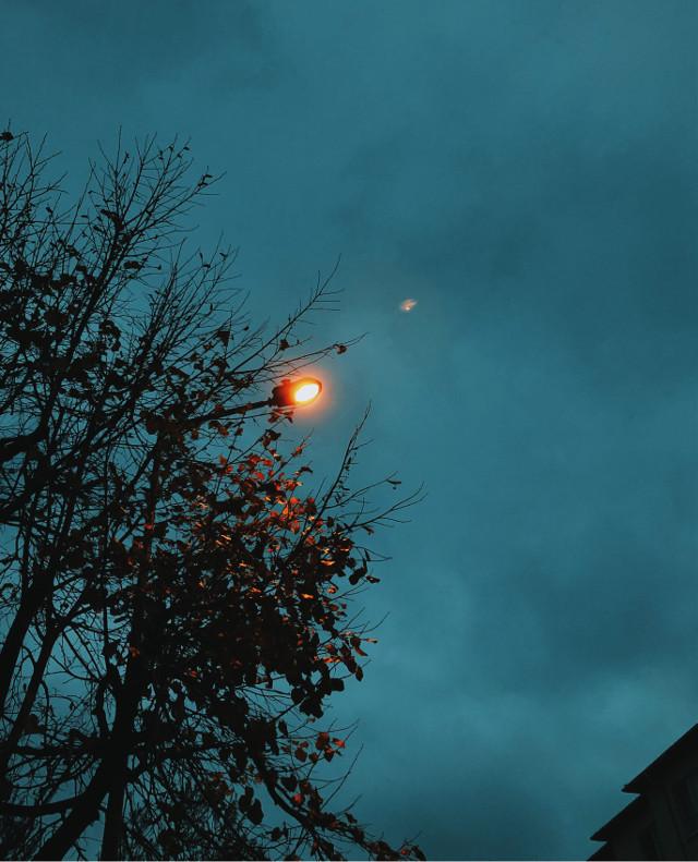 #streetlight #streetlamp #tree #sky #twilight #leaves #blue #cloudy #mobilephotography