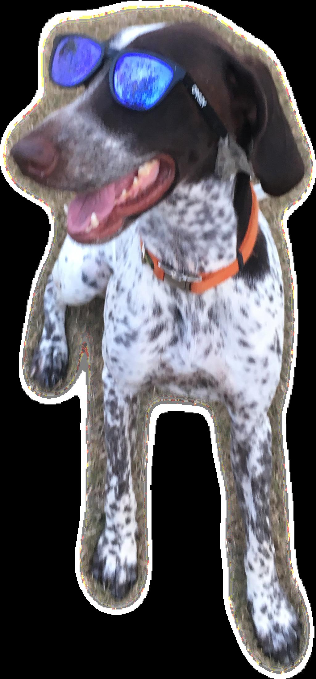 #dog #freetoedit