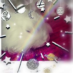 freetoedit white decoration bunnylove animalover