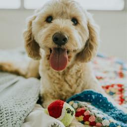 dog dogs animal pets pet freetoedit